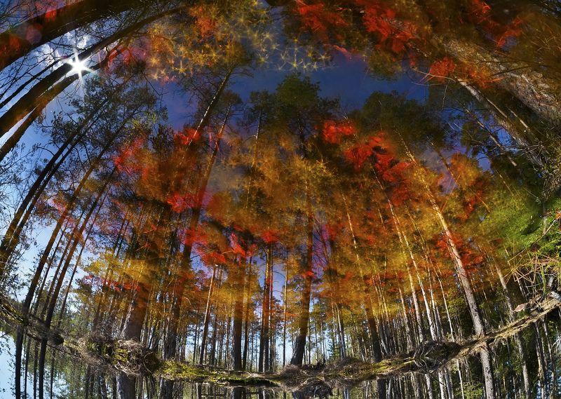 весна, половодье,  отражение, сфагнум Плеядыphoto preview