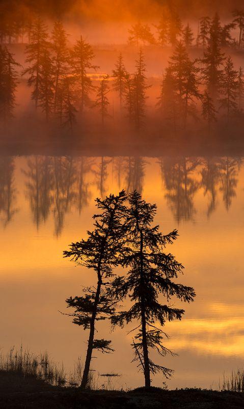 рассвет, туман, природа На рассветеphoto preview