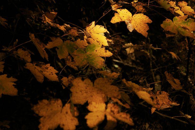 осень, лес, сербия, листья, желтый,autumn, forest, serbia, leaves, yellow, Passing timephoto preview