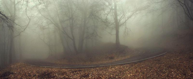 Туман, дорога Поворотphoto preview