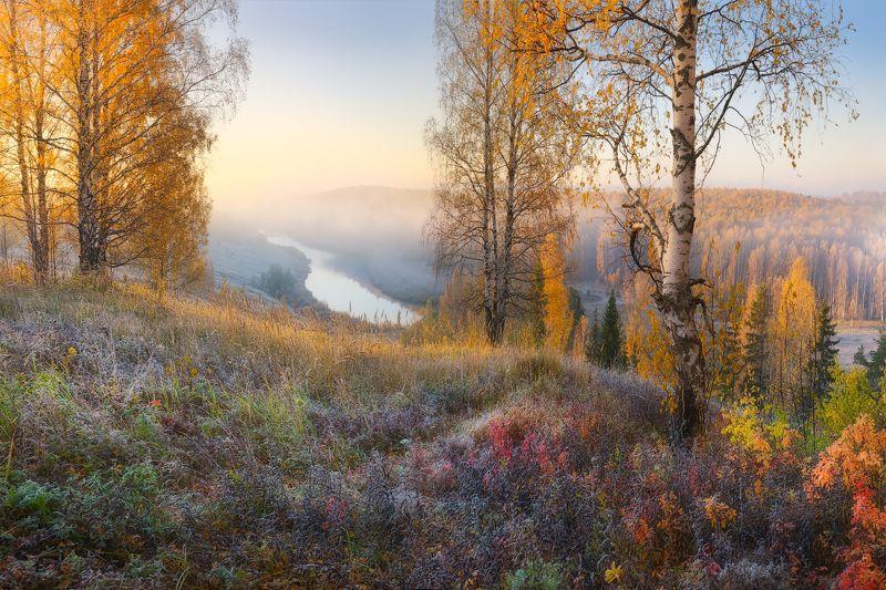 осень, лес, туман ***photo preview