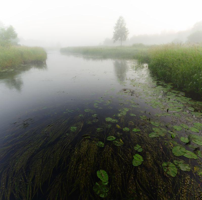 туман, река, кувшинки, дерево, лето, трава,  Туманное утро photo preview