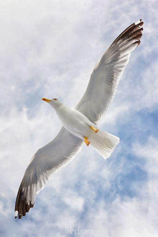 bird, flight, seagull, Весенний Полетphoto preview