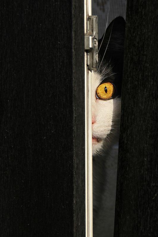 окно, створка, рама, кот, глаз, всевидящее око, слежка, надзиратель, надзор Пасучий глазphoto preview