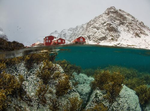 Two Worlds. Underwater Lofoten.