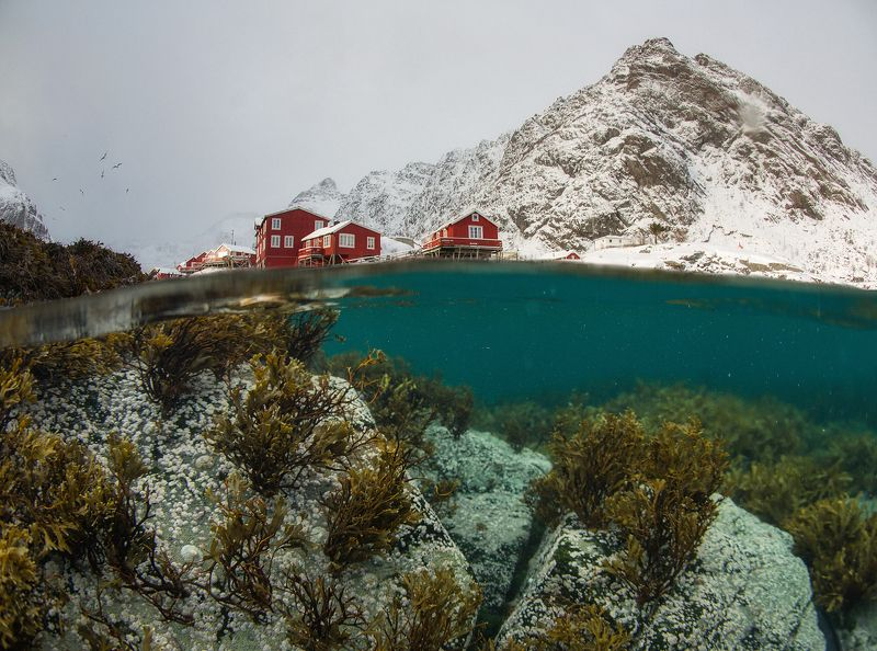 norway, lofoten, underwater, winter Two Worlds. Underwater Lofoten.photo preview
