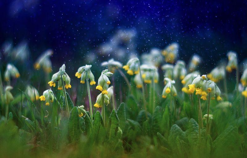 первоцвет сон в начале весныphoto preview
