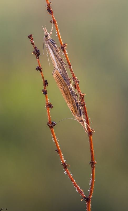 macro, makro, wild, wildlife, buttrrfly, nature, insect ...photo preview