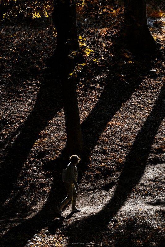 Люди, город, улица, жанр, свет, тени, человек, деревья, парк, осень,  ***photo preview