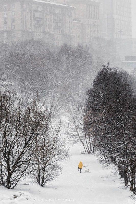 Люди, город, улица, жанр, человек, животное, собака, снегопад, деревья, снег, зима, цвет, желтый,  ***photo preview