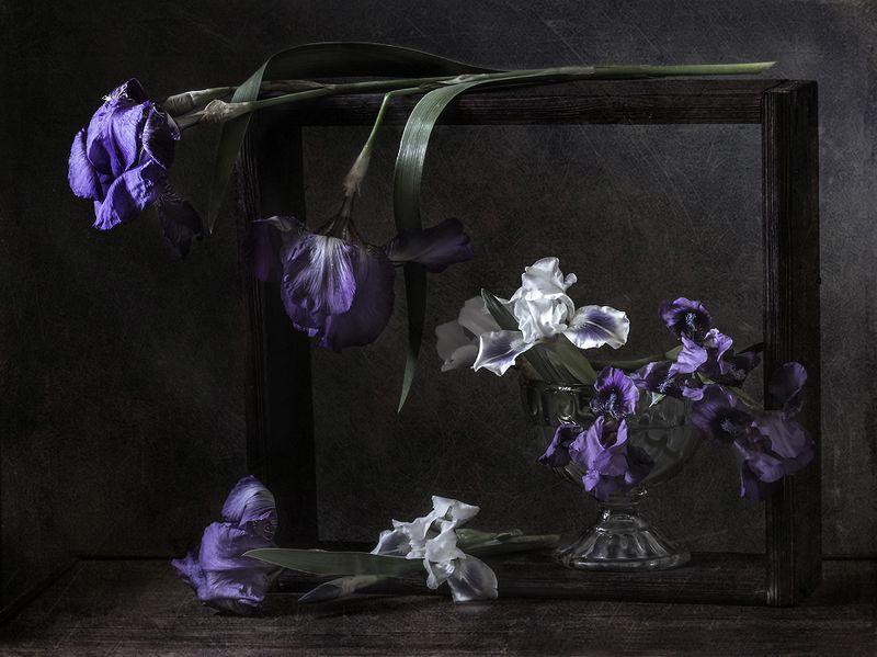 натюрморт, цветы, ирисы, still life Про ирисыphoto preview