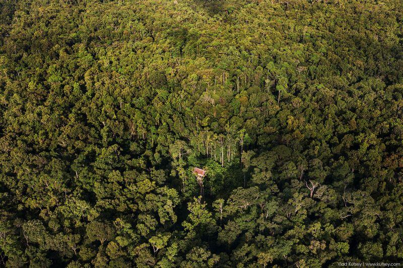 korowai, papua, treehouse, korowaitribe, папуа, короваи, джунгли, домнадереве В полной изоляцииphoto preview