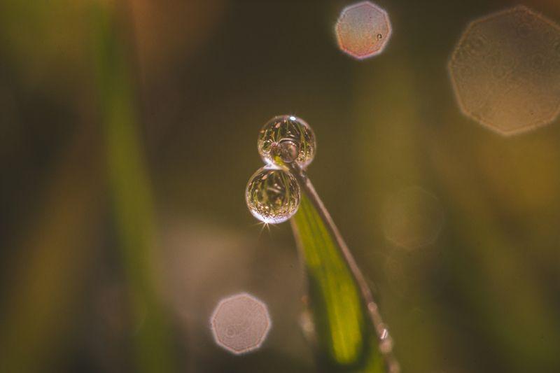 макро, роса, утро, флора Утренняя росаphoto preview