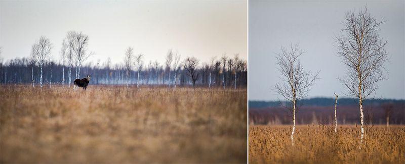 Biebrza National Park - Polandphoto preview
