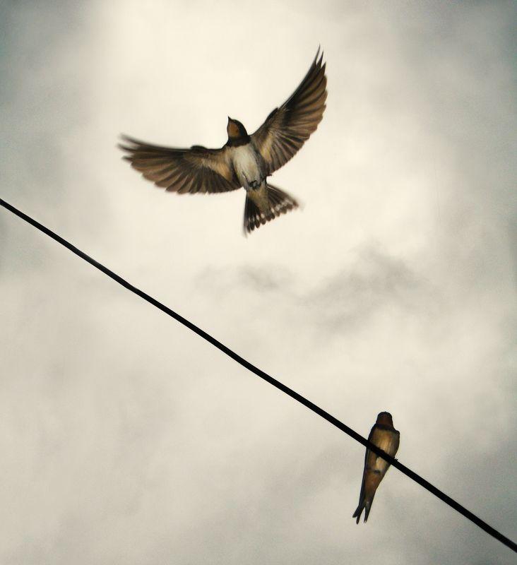 воробей, птица, провод, кабель, полет, открытый, крылья, выше, животные, полет, облачно, небо,sparrow, bird, wire, cable, flight, open wings, above, animals, flying, cloudy, sky, Goodbye my lovephoto preview