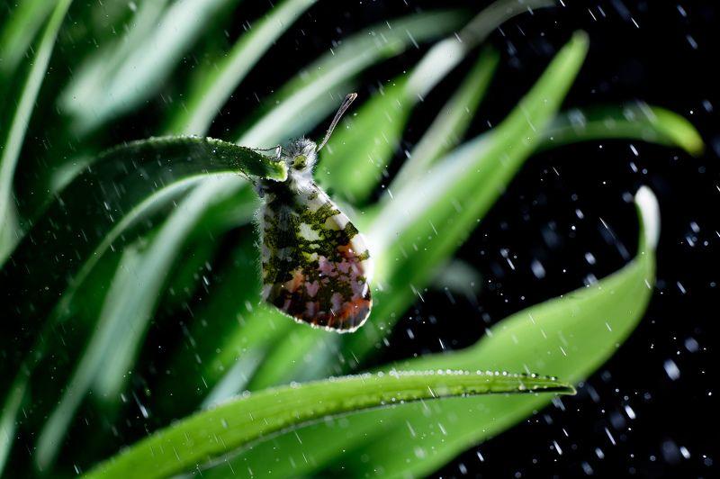 Бабочка, уснула сегодня у нас во дворе.photo preview