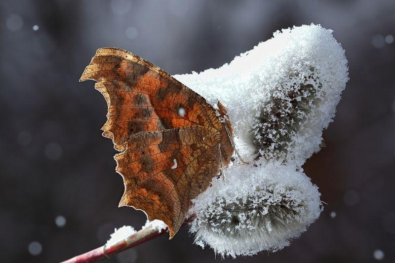 макросьемка Ночной снегопадphoto preview