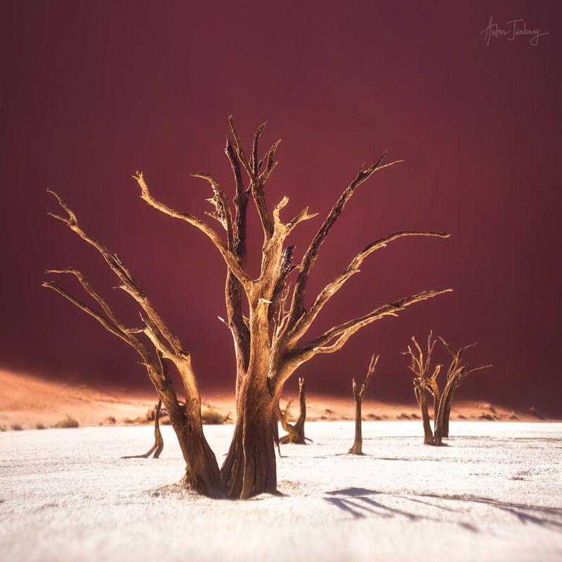 Tree, Sossusvlei, Deadvlei, Namibia, valley, Desert, Namib, sand, dune, dead  Дерево, мертвая долина, Намибия, Намиб, пустыня, дюны, песок, плато Deadvlei / Мертвая Долинаphoto preview