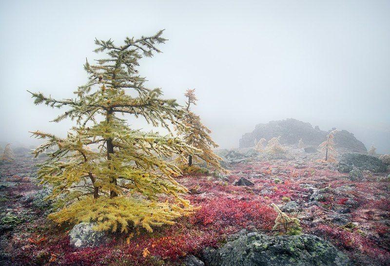 Золотая осень на Серебрянском камнеphoto preview