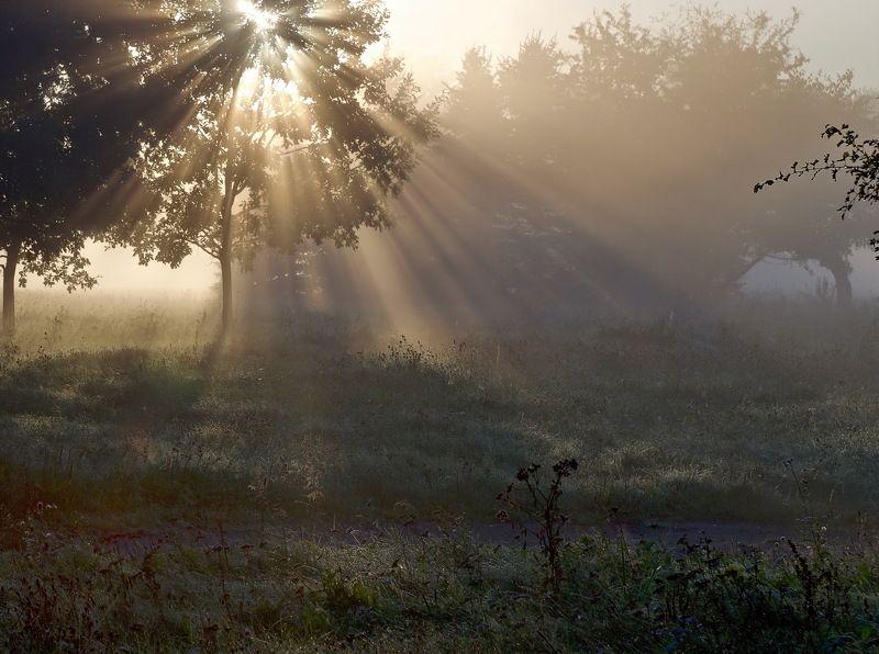 утро,свет,минск ...photo preview