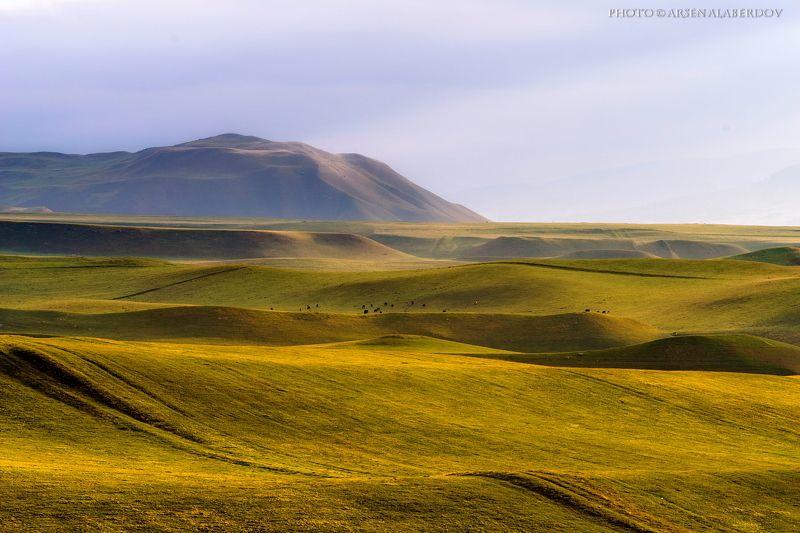 весна, поле, холмы, равнина, долина, утро, небо, карачаево-черкесия, кавказ, простор ВЕСЕННЯЯ КАРАЧАЕВО-ЧЕРКЕСИЯphoto preview