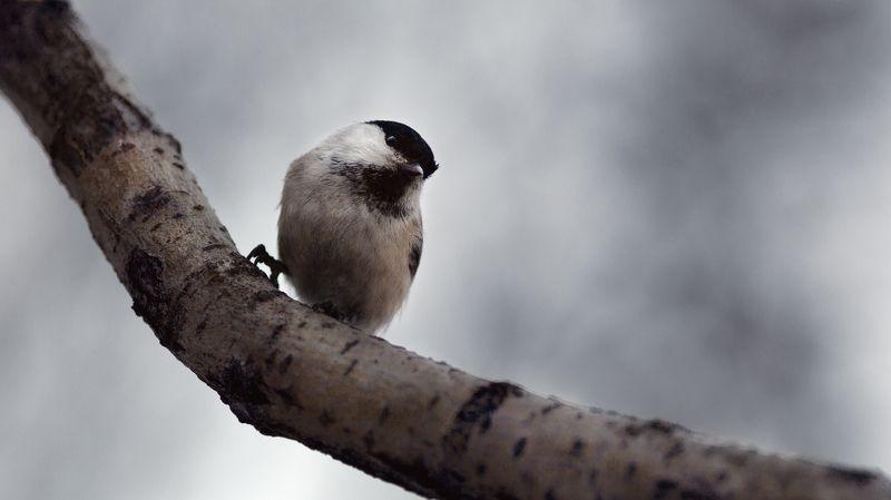 птица, животные, природа, весна ***photo preview