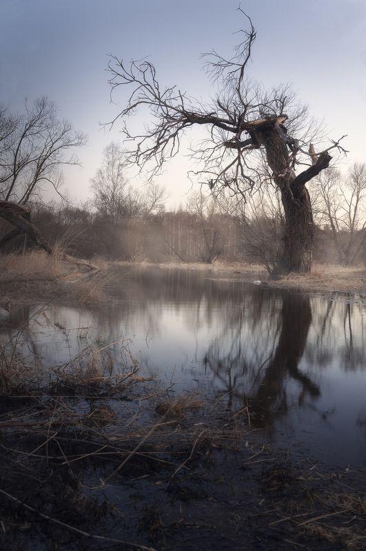 весна, природа, никон, пейзаж, дерево, туман Апрельphoto preview