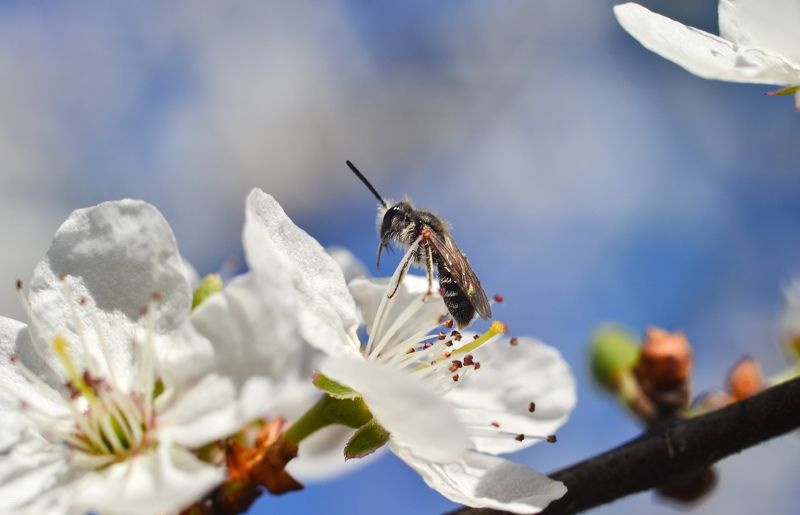 весна, цветы, макро Весенняяphoto preview