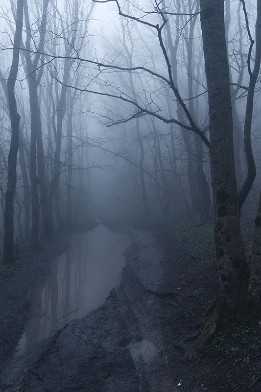 развалк, ставропольский край, туман, лес Туманный лесphoto preview