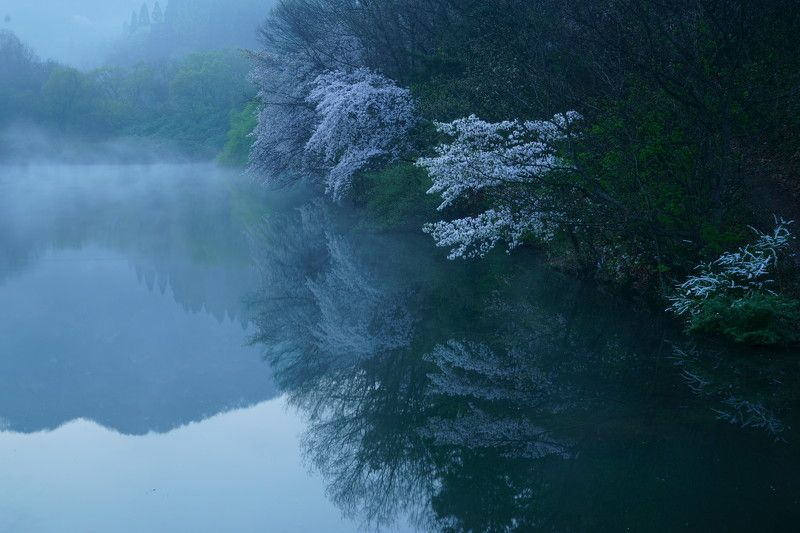 korea,spring,reservoir,morning,cherry blossom,fog,mountain,landscape Reflection of cherry blossomsphoto preview