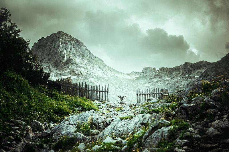 черногория, дурмитор, альпийские горы, летние пастбища, забор, овен, шерсть, животные, домашние, ворота, нереальные,montenegro, durmitor, alpine, mountains, summer pasture, fence, ram, wool, animal, domestic, gate, unreal, Gatekeeperphoto preview