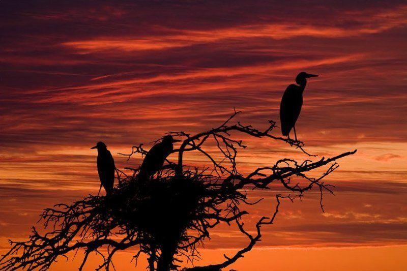 цапти, закат, птицы Сумеречный дозор.photo preview