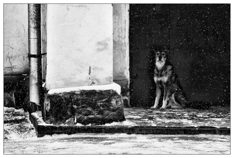black and white, ч/б, жанр, черное и белое ДОМ ТАМ, ГДЕ ЖДУТ...photo preview