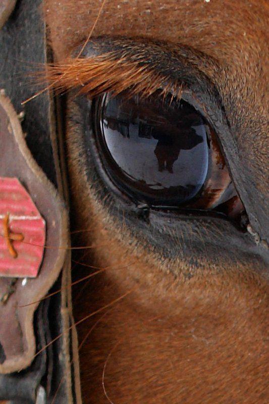 кони, лошади, горы Ходит в поле красный коньphoto preview