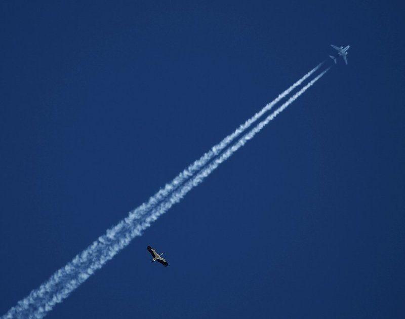 аист, самолет, небо Летатьphoto preview