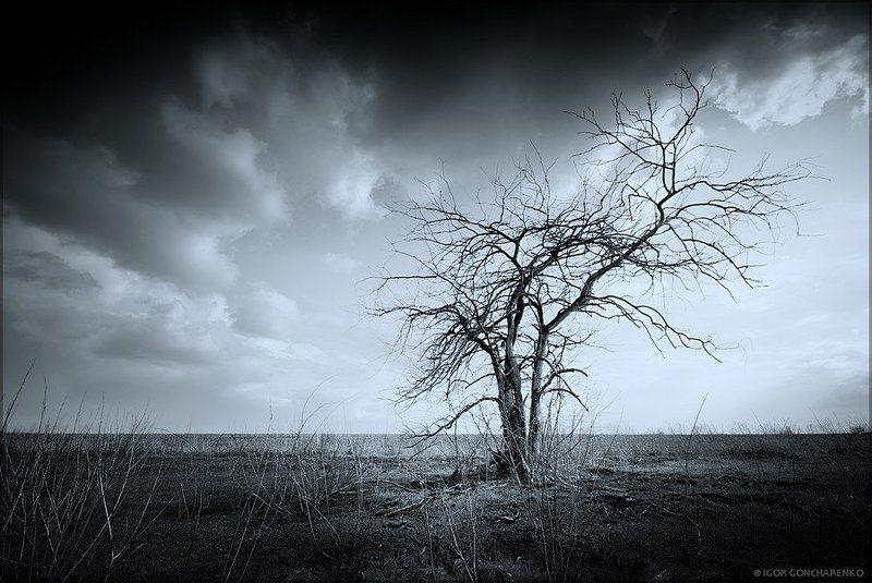 дерево, пейзаж, засуха, мертвое, После войны...photo preview