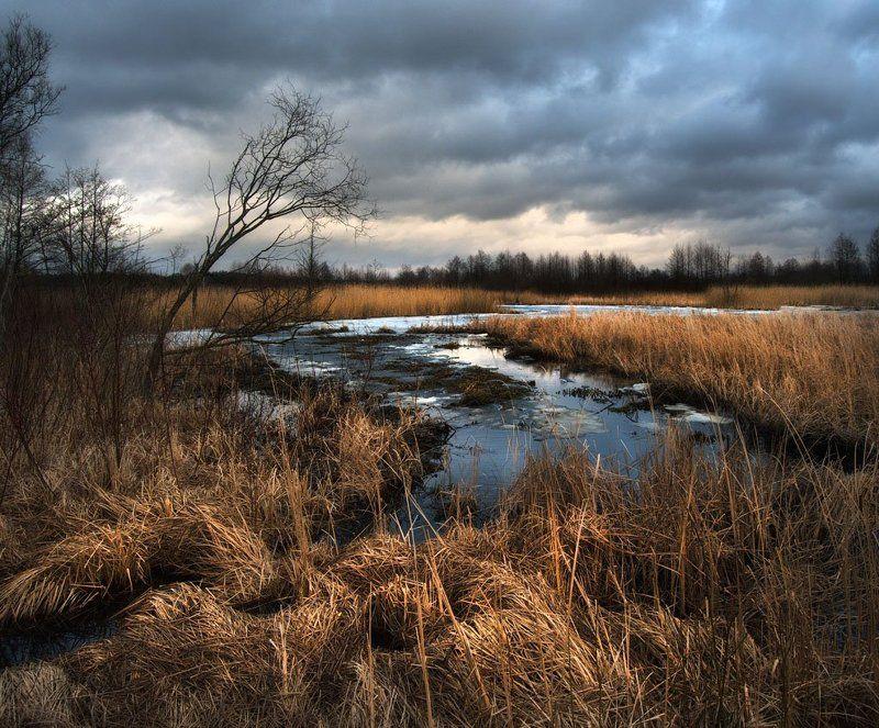 весна, щара, река, беларусь Пойма Щарыphoto preview