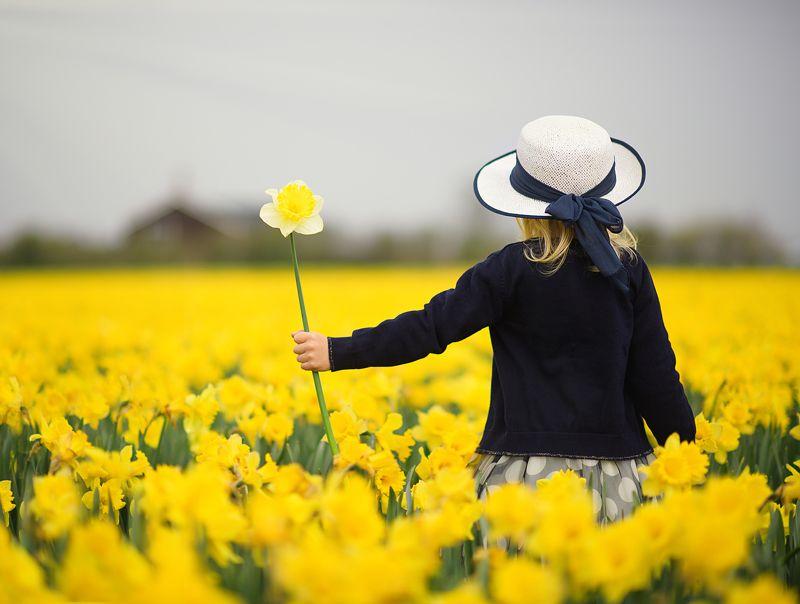 spring нарциссы голландия поле цветов весна frühling holland blumen Springphoto preview