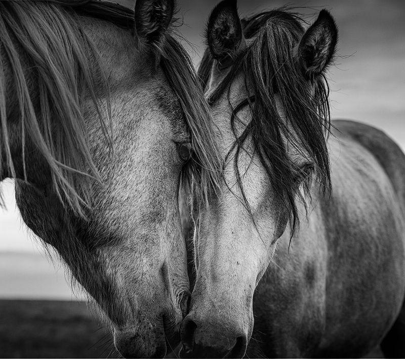 черно-белое, ирландия, животные, ireland, black and white, animals photo preview