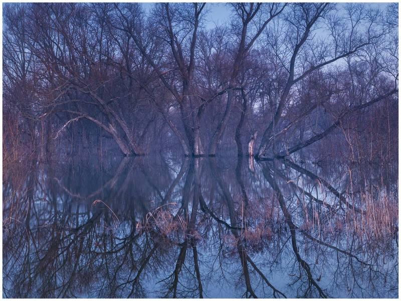весна, деревья, отражения, пейзаж, разлив, рассвет, сумерки, утро, весенний разлив, паводок, деревья в воде Весенний разливphoto preview