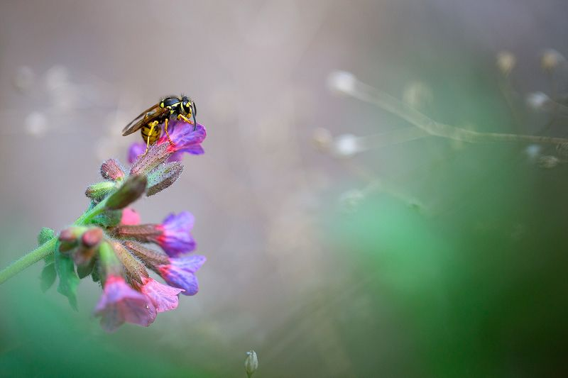 insects,wasp,macro,beautiful,insect,wild,wildlife,nature,faerie,close up, Waspphoto preview
