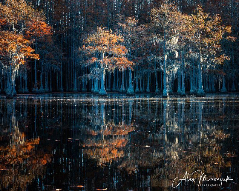 болото, кипарис, сша, джорджия, осень, фототур, отражение Кипарисовые болота Джорджииphoto preview