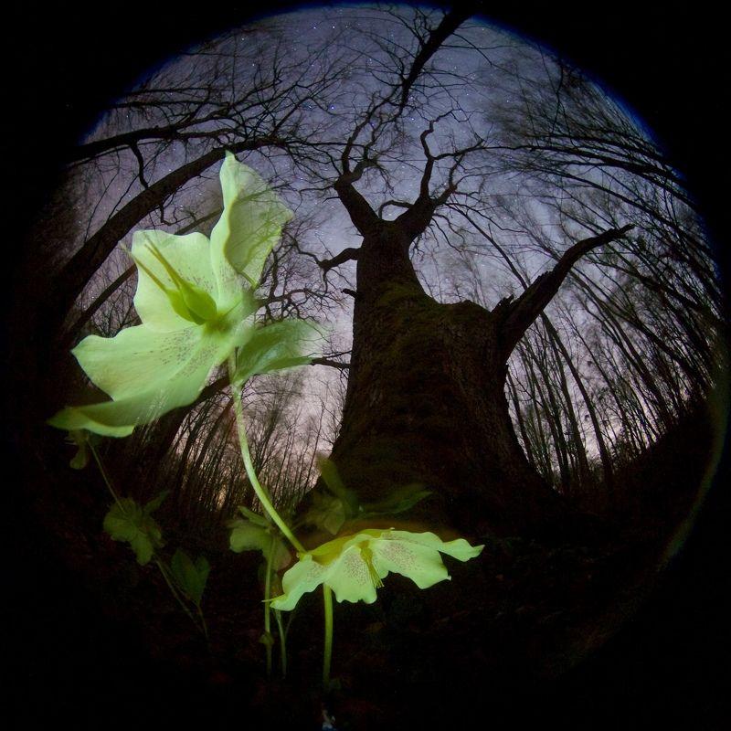 весна, ночь, кавказ, цветок, звезды, лес Там, где цветы до небесphoto preview