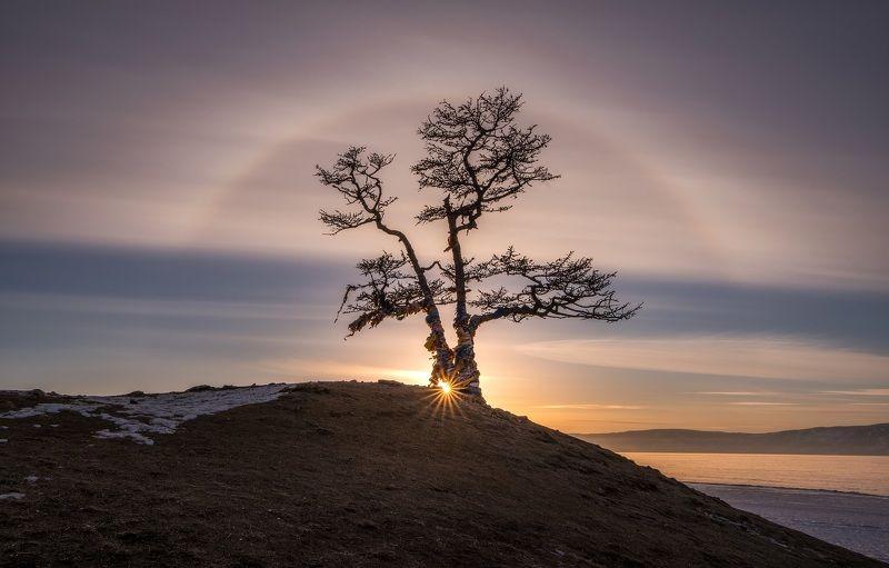 байкал, гало, дерево, небо, солнце, сибирь, дерево желаний, ольхон Солнечное гало над деревом Желаний оз. Байкал. Сибирьphoto preview
