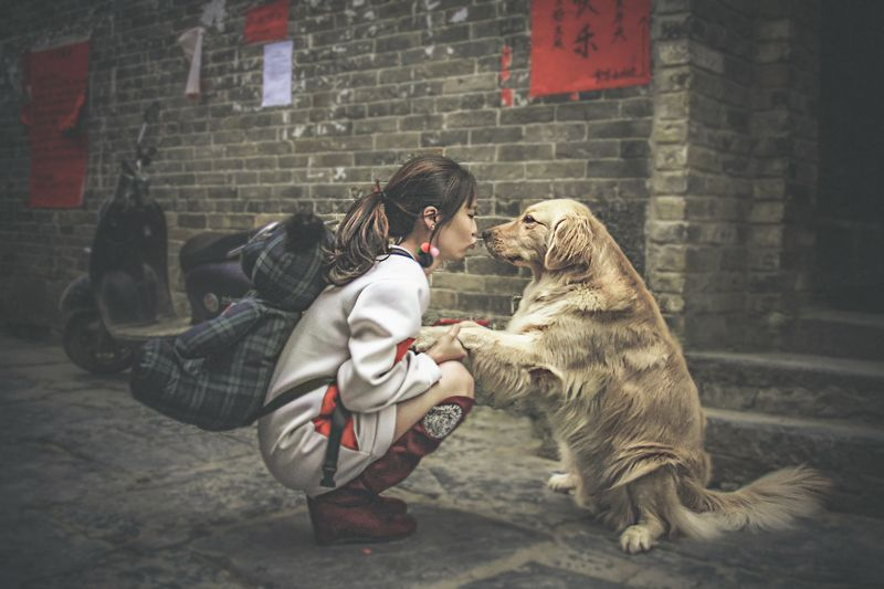 china, китай, farewell. расставание, kiss, поцелуй, moped, motorbike, мопед, teddy bear, мишка, street, девочка, chinese girl, путешествия, travel,  dog, собака, Я вернусь... Обещаю!photo preview