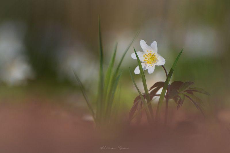 природа, весна, цветы Весенний минимализмphoto preview