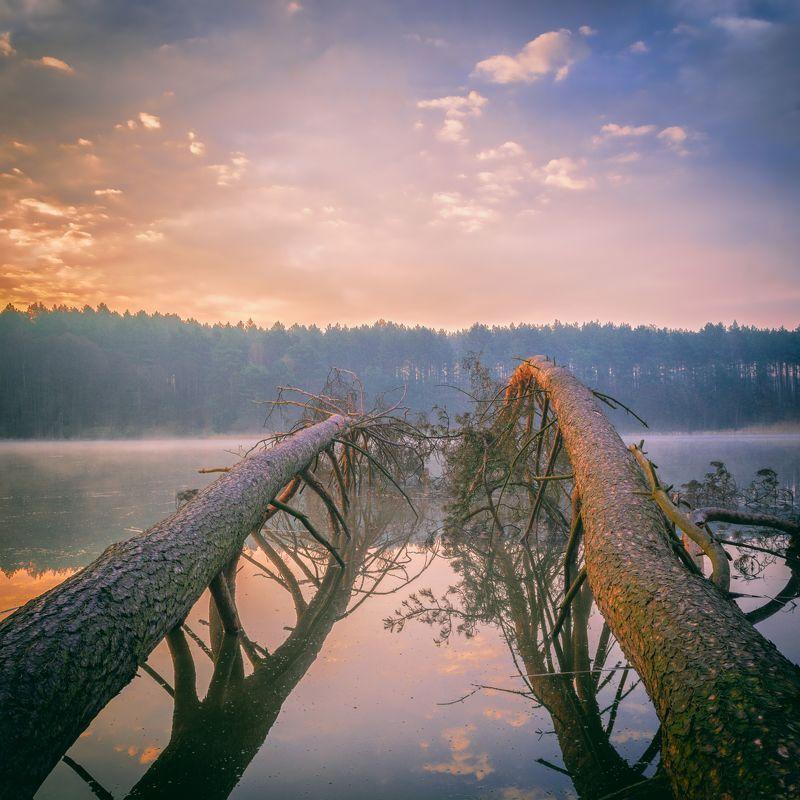 dawn,fog,trees,lake,nature,landscape,sky,clouds,sunlight,mirror, Hear the silencephoto preview