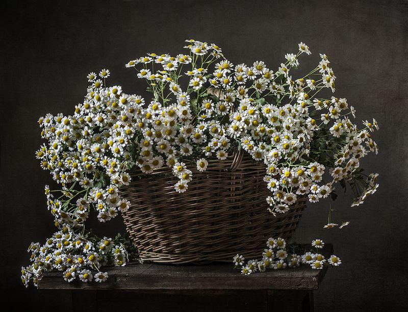 натюрморт, цветы, still life Матрикарияphoto preview