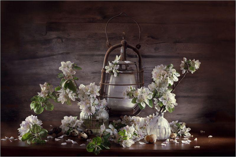 натюрморт,весна Цветы нового дня...photo preview
