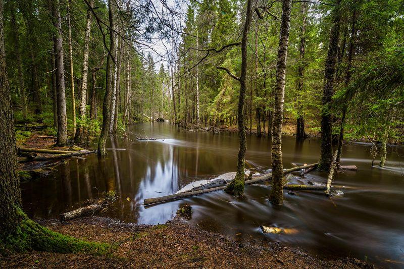 лес, река, весна, вода, nd, Лесная тишь.photo preview